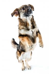 "Special ""Hunde"""