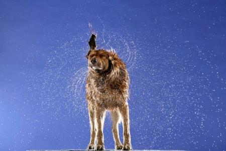 Special (Hunde)
